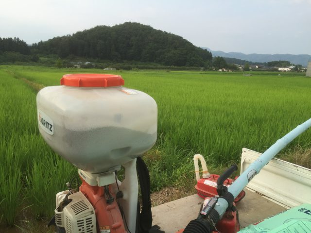 草刈りと田んぼの除草作業、草との格闘